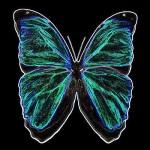 ButterflyBC