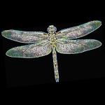 DragonflyBC