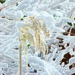 snowgrass bc