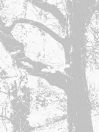 wise treespale