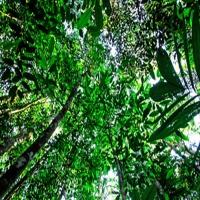 canopy700