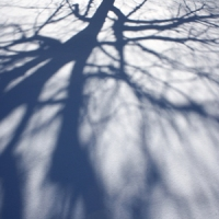 shadows300