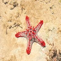 Starfish700